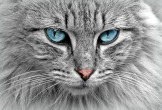 cat-1045782_1920.jpg